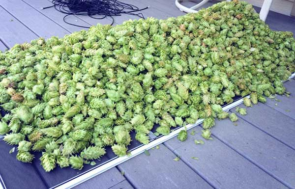 how to build a hops dryer